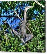 Amazing Heron Canvas Print