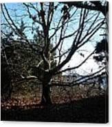 Amazing Tree Canvas Print