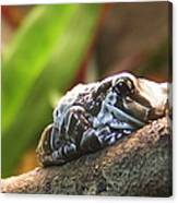 Amazon Milk Frog Canvas Print