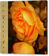 Amber Queen Rose Canvas Print