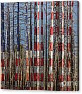 America Still Beautiful Canvas Print