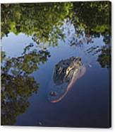 American Alligator In The Okefenokee Swamp Canvas Print