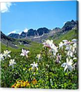 American Basin Columbines Canvas Print