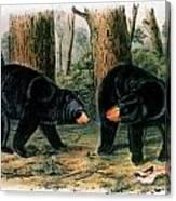 American Black Bear, 1844 Canvas Print