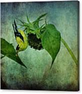 American Goldfinch II Canvas Print