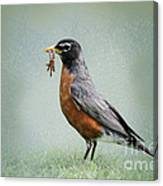 American Robin With Worms Canvas Print
