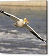 American White Pelican Pelecanus Canvas Print