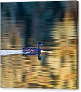American Wigeon 1 Canvas Print