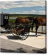 Amish Buggies Canvas Print