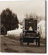 Amish Buggy And Wagon Canvas Print