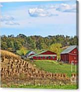 Amish Cornfield Canvas Print