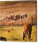Amish Transportatin All Sizes Canvas Print
