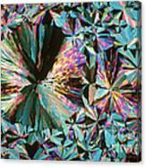 Ammonium Nitrate Canvas Print