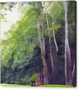 Among The Sycamores Canvas Print