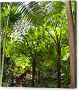 Among The Tree Ferns Canvas Print