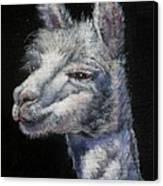 Amorous Alpaca Canvas Print