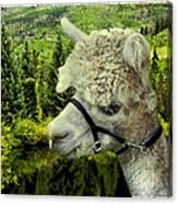 An Alpaca In Vail Canvas Print