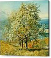 An Alpine Lake Canvas Print