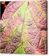 An Autumn's Leaf Canvas Print