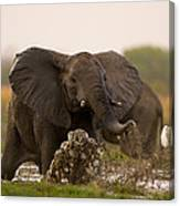 An Elephant Charges When Startled Canvas Print