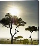 An Elephant Walks Among The Trees Kenya Canvas Print