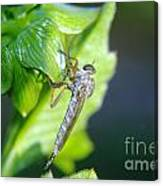 An Insect Resting  Canvas Print