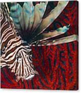 An Invasive Indo-pacific Lionfish Canvas Print