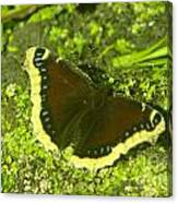 An October Butterfly  Canvas Print