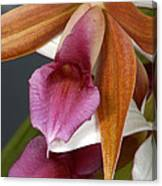 An Orchid, Probably A Cattleya Hybrid Canvas Print