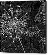 Anatomy Of A Flower Monochrome 2 Canvas Print