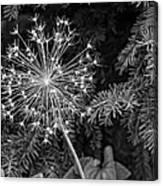 Anatomy Of A Flower Monochrome Canvas Print