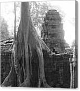 Ancient Temple With Strangler Fig Canvas Print