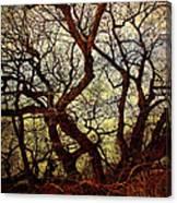 Ancient Winter Tree Canvas Print