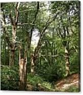 Ancient Woodland Canvas Print