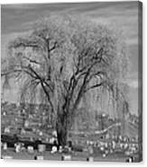 And The Willow Tree Weeps Canvas Print