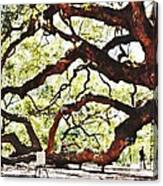 Angel Oak Tree 2 Canvas Print