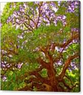Angel Oak Tree1 Canvas Print