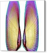 Angel Wing Shell, X-ray Canvas Print