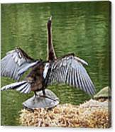 Anhinga On Turtle Canvas Print