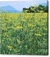 Anise To The Mountains Canvas Print
