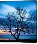 Another Favorite Tree Canvas Print