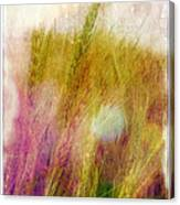 Another Field Of Dreams Canvas Print