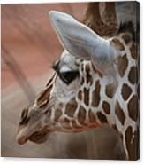 Another Giraffe Canvas Print