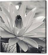 Ansel's Lily Canvas Print
