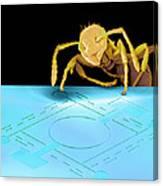 Ant On Pressure Sensor, Sem Canvas Print