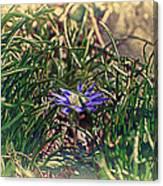 Antiquated Flower Canvas Print