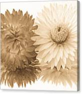 Antique Floral Duo Canvas Print