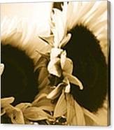 Antique Petals Canvas Print