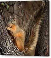 Apache Fox Squirrel Canvas Print