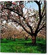 Apple Orchard, Co Armagh, Ireland Canvas Print
